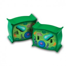 Cross-Section Plant Cell Model
