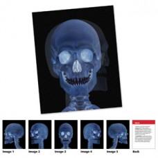 Human Body Card Set